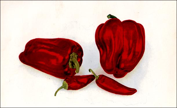 Red Pepper picture